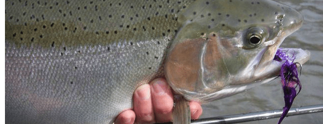 Proposal would reduce daily limits for steelhead on Little