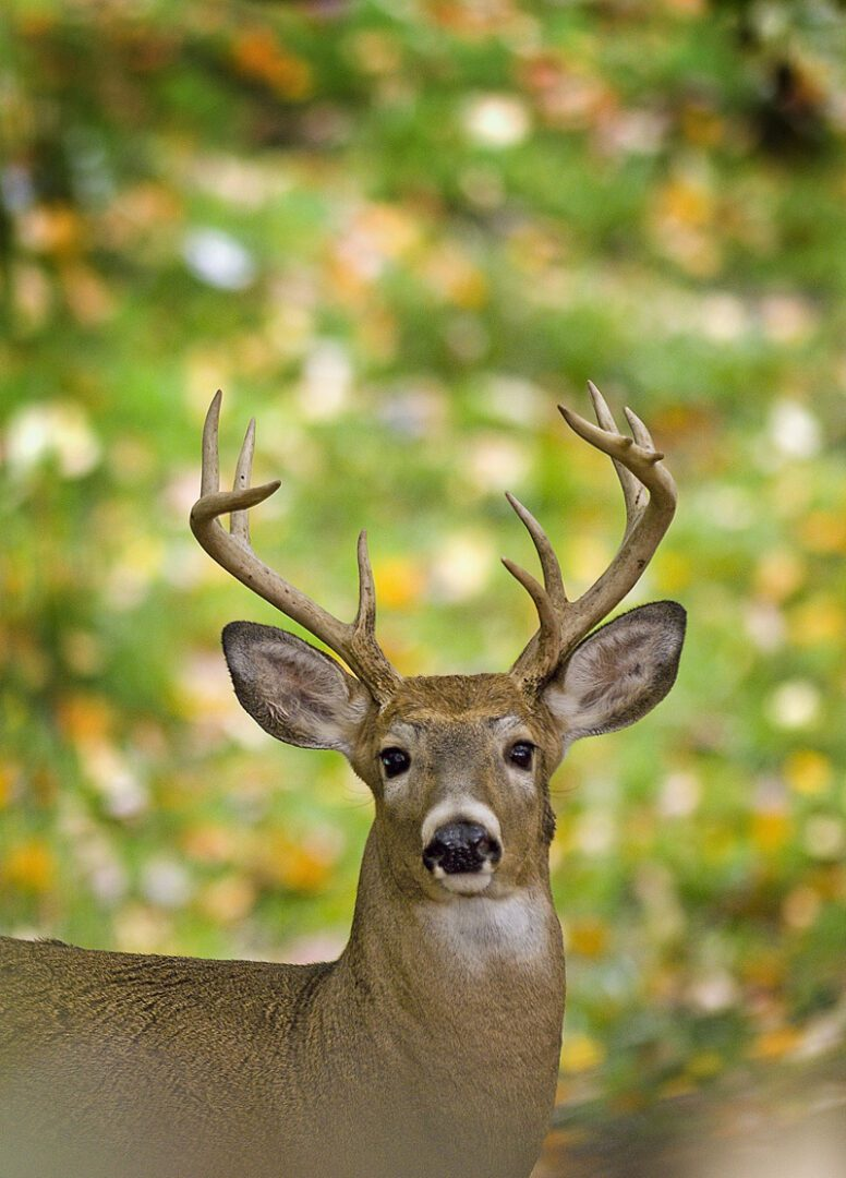 DNR reminds hunters of education course requirements before heading out this fall