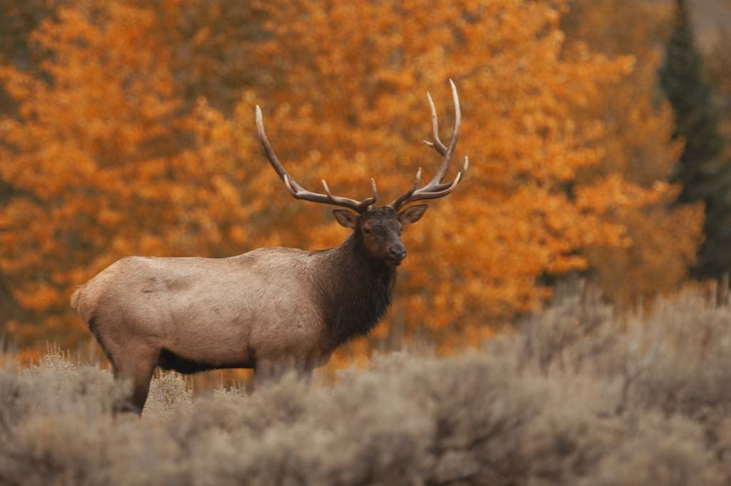 Results of elk drawing posted on DNR website