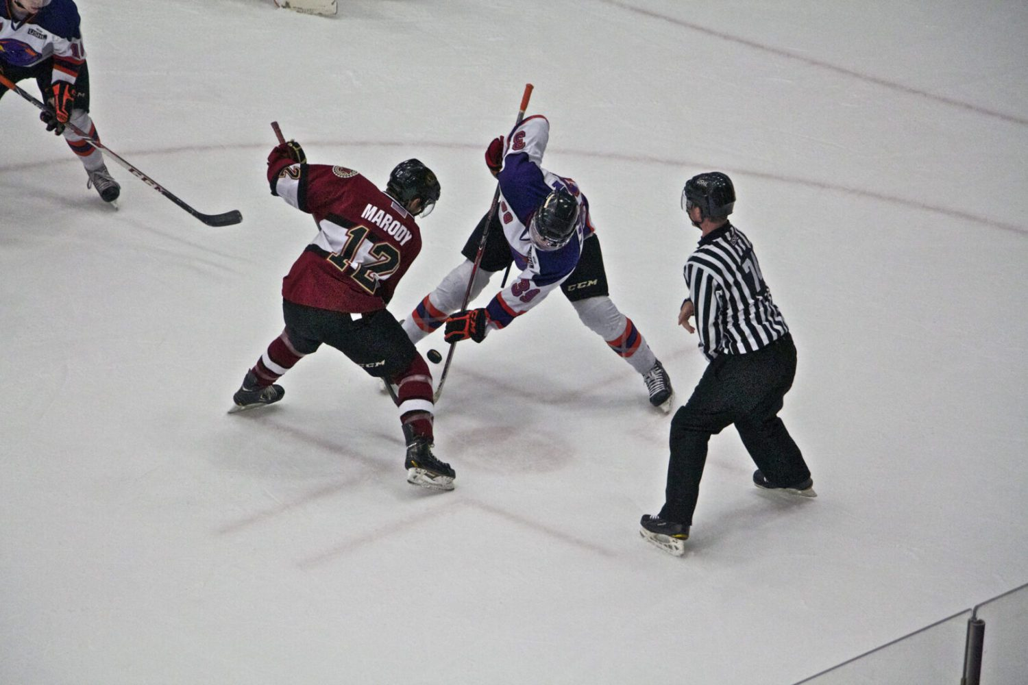Scoring champ Matt Iacopelli, 14 other returnees will be in town this week for Muskegon Lumberjacks Tryout Camp