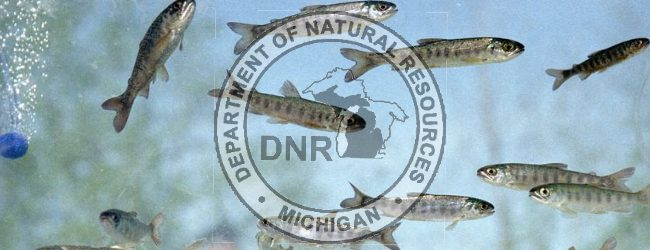 DNR reports: Popular 'Salmon in the Classroom' program hooks kids on learning about the natural world [video]